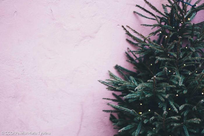 geschichte des weihnachtsbaums wie eine deutsche die. Black Bedroom Furniture Sets. Home Design Ideas