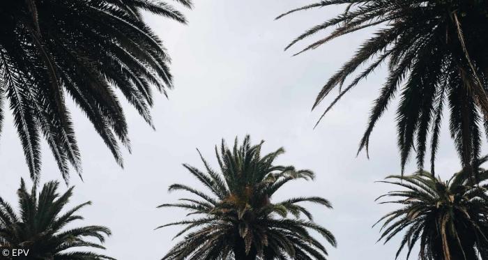 Was Bedeutet Palmsonntag